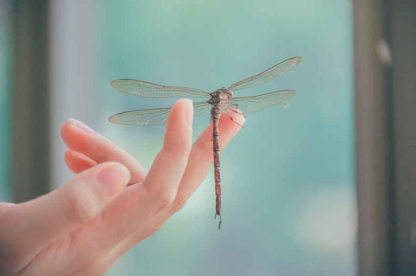 close up photography of dragonfly perched on a finger